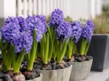 Комнатные домашние растения