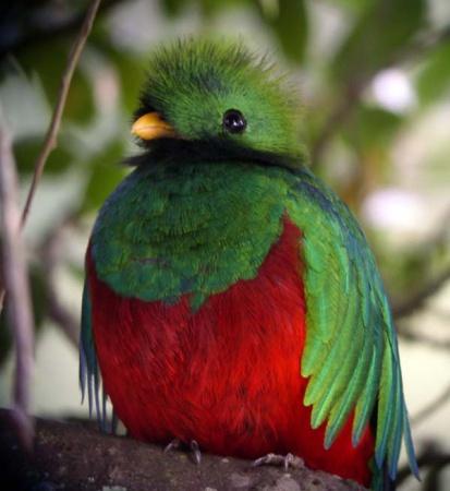 Маскот Ubuntu 12.10 Quantal Quetzal