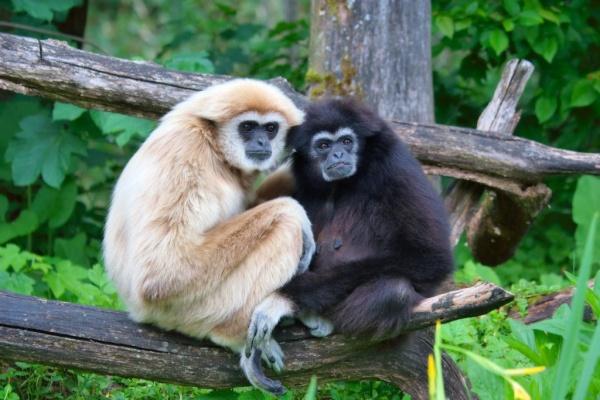 Маскот Ubuntu 7.10 Gutsy Gibbon