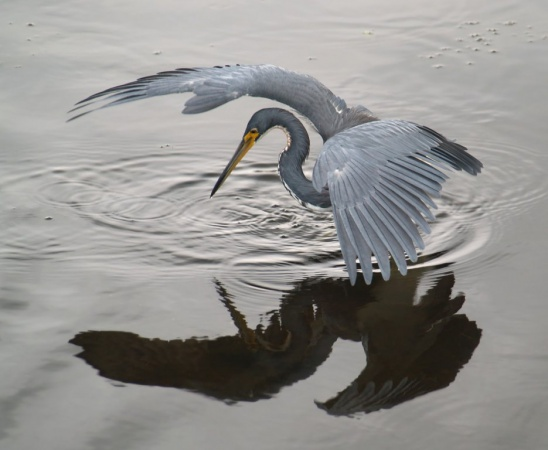 Маскот Ubuntu 8.04 Hardy Heron